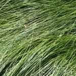Soft long grass — Stock Photo
