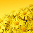 Yellow flower — Stock Photo #3909426