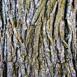 Texture bark — Stock Photo #3909810