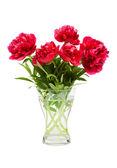 Flower peonies — Stockfoto