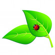 Ladybird on a green leaf — Stock Vector