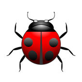 Vector ladybug illustration — Stock Vector