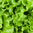 Fresh lettuce leaves - Stock Photo