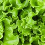 Fresh lettuce leaves — Stock Photo #2996879
