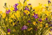 Bouquet of wild colors — Stock Photo