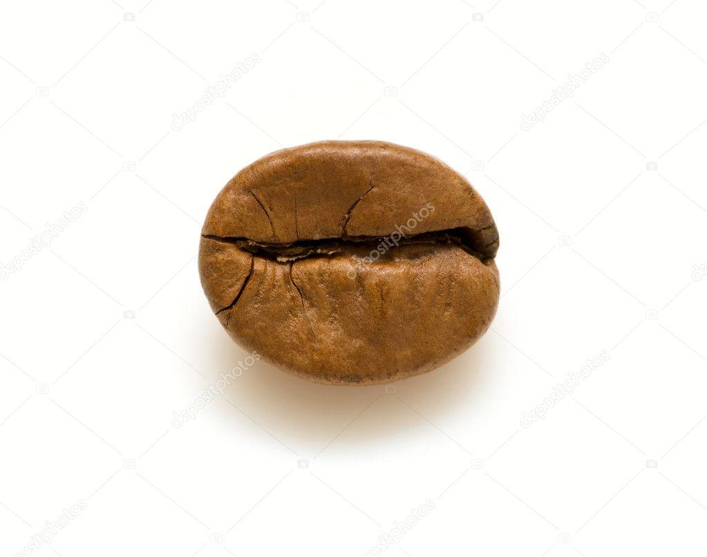 Single coffee bean — Stock Photo © DNKSTUDIO #3792709
