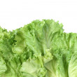 Lettuce Background - Photo