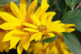 Flores amarelas — Fotografia Stock