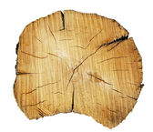Tree trunk cut — Stock Photo