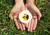 Flower in palms of hands — Stock Photo
