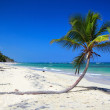 Stock Photo: Palm on wild beach