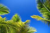 Green palms leaf on blue sky — Stock Photo