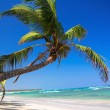 Palm on caribbean beach — Stock Photo