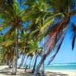 Palms on caribbean sea — Stock Photo