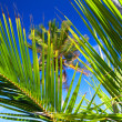Caribbean palms on blue sky - Foto de Stock  