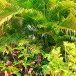 Stock Photo: Tropic flora