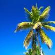 Palms on sky — Stock Photo