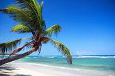 Palm on caribbean sea — Stock Photo