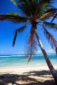 Palma do Caribe — Fotografia Stock