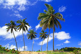 Tropical nature — Stockfoto