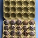 Quail eggs — Stock Photo #3154751