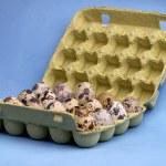 Quail eggs — Stock Photo #3154762