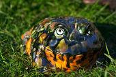 Decorative toad — Stock Photo