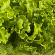 Lettuce bunch background — Stock Photo