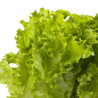 Lettuce bunch background — Stock Photo #3357624