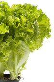 Kopfsalat-bündel — Stockfoto