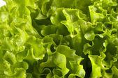 Lettuce bunch background — Stock Photo