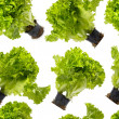 Lettuce bunches seamless wallpaper — Stock Photo