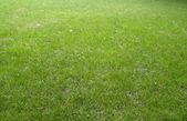 трава фону — Stok fotoğraf