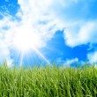 Green field and sun sky — Stock Photo