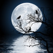 Ravens sitting on a tree shined with the full moon - Stock Photo