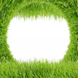 Green grass isolated on white background — Foto de Stock