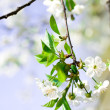 Flower tree - Stock Photo