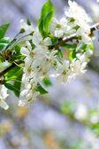 Flower tree — Stock Photo