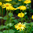 Yellow flowers - Stock Photo