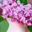 Lilac blooms — Stock Photo #3171776