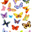 Set of different butterflies — Stockvektor