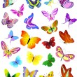 Set of different butterflies — Stock Vector