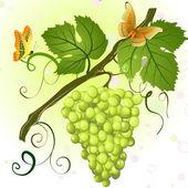 Branch of green grapes — Stockvektor