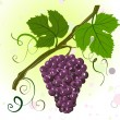 Branch of grapes — Stock Vector #2831125