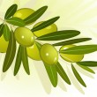 Olive branch — Stock Vector