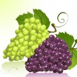 Grapes — Stock Vector #2891362