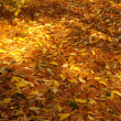 Carpet of leaves — Foto Stock