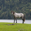 Horses on the shore — Stock Photo