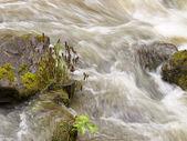 Woda żółty — Zdjęcie stockowe