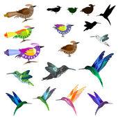 Ptáci sada背景与黑色和白色的光效应 — Stock vektor